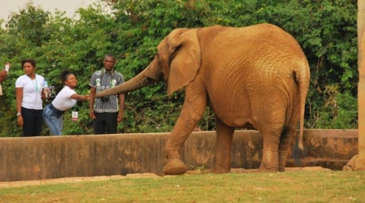 Jos wildlife park is among the most Beautiful places in Nigeria