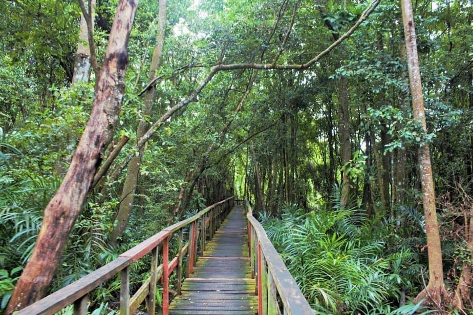 Lekki Conservation Center is a fun place to hangout in Lekki